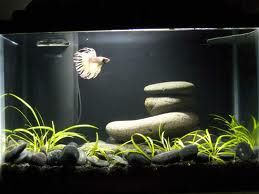 Tank Ideas For Bettas Google Search Betta Fish Tank Betta Aquarium Betta