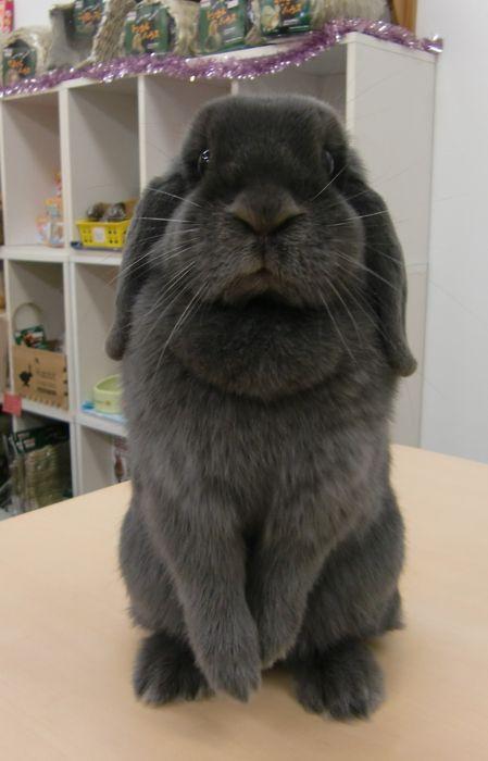 awwww..... #bunny