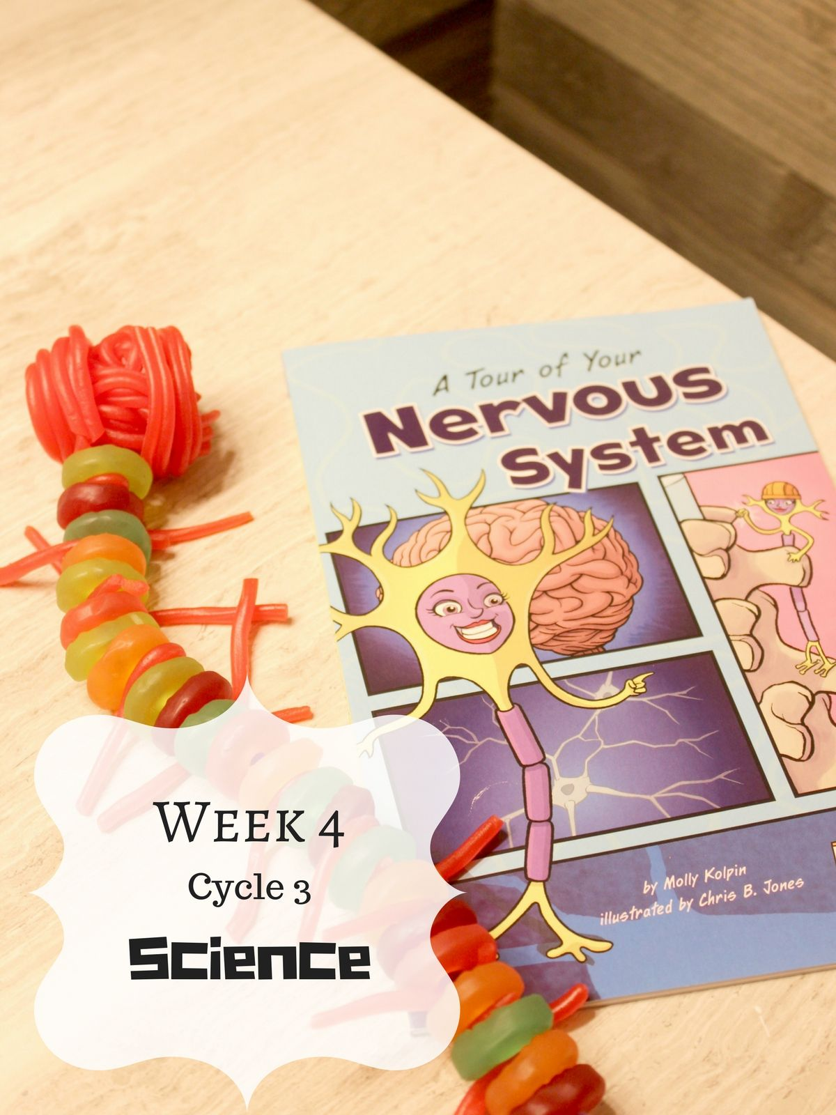 Cycle 3 Of Classical Conversations The Nervous System