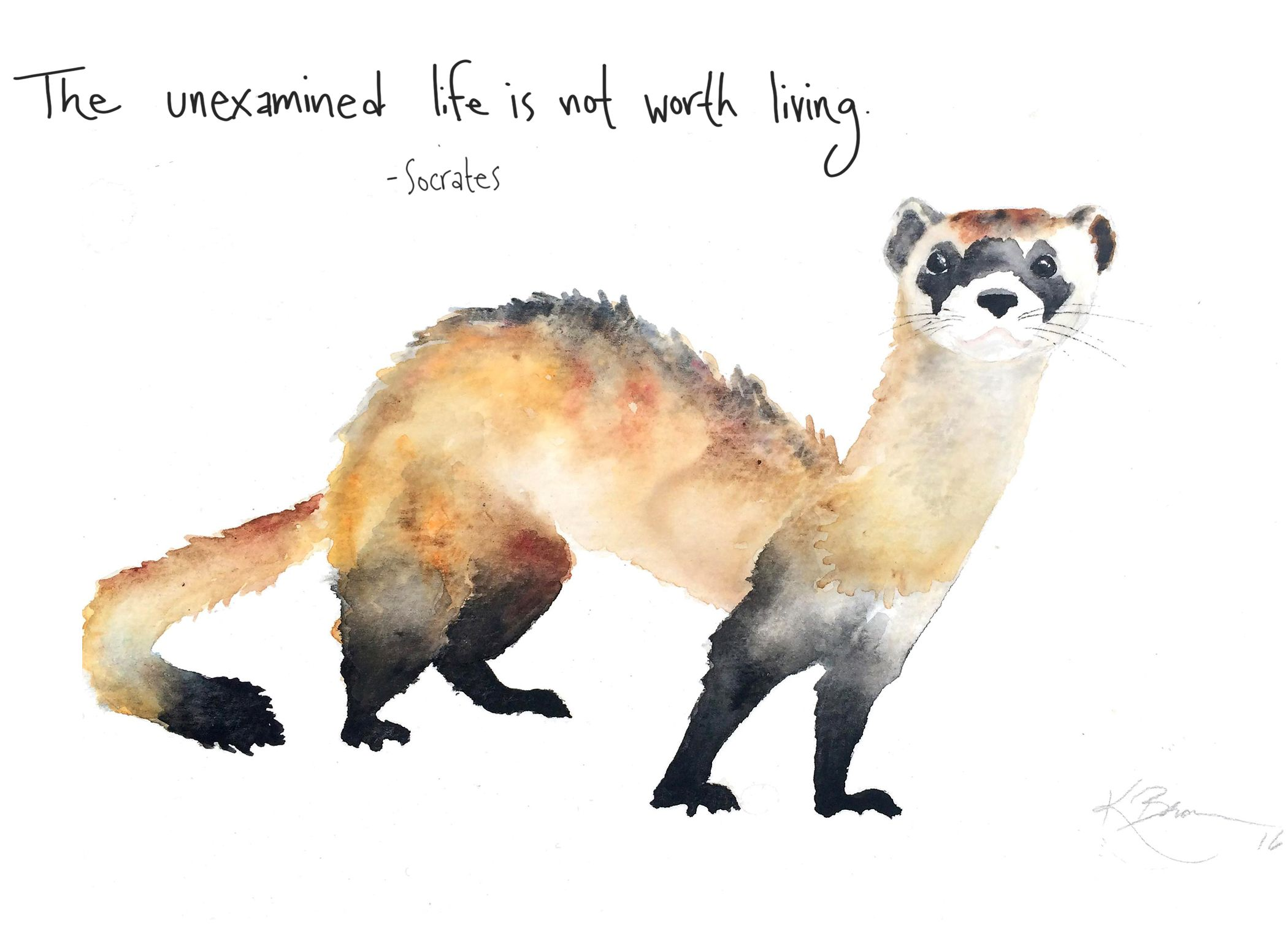 Black-footed Ferret watercolor | Art
