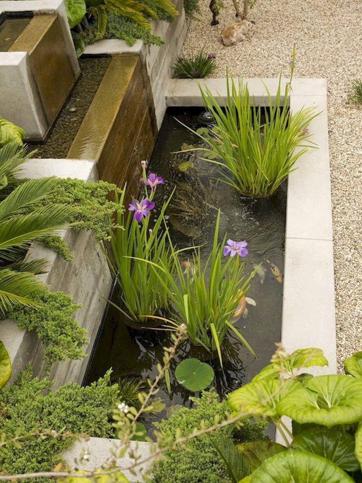 Pin Oleh Iwan Suryono Di Tanaman Air Kebun Kebun Tanaman Hidup
