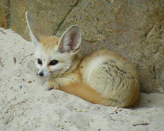 exotic-pets