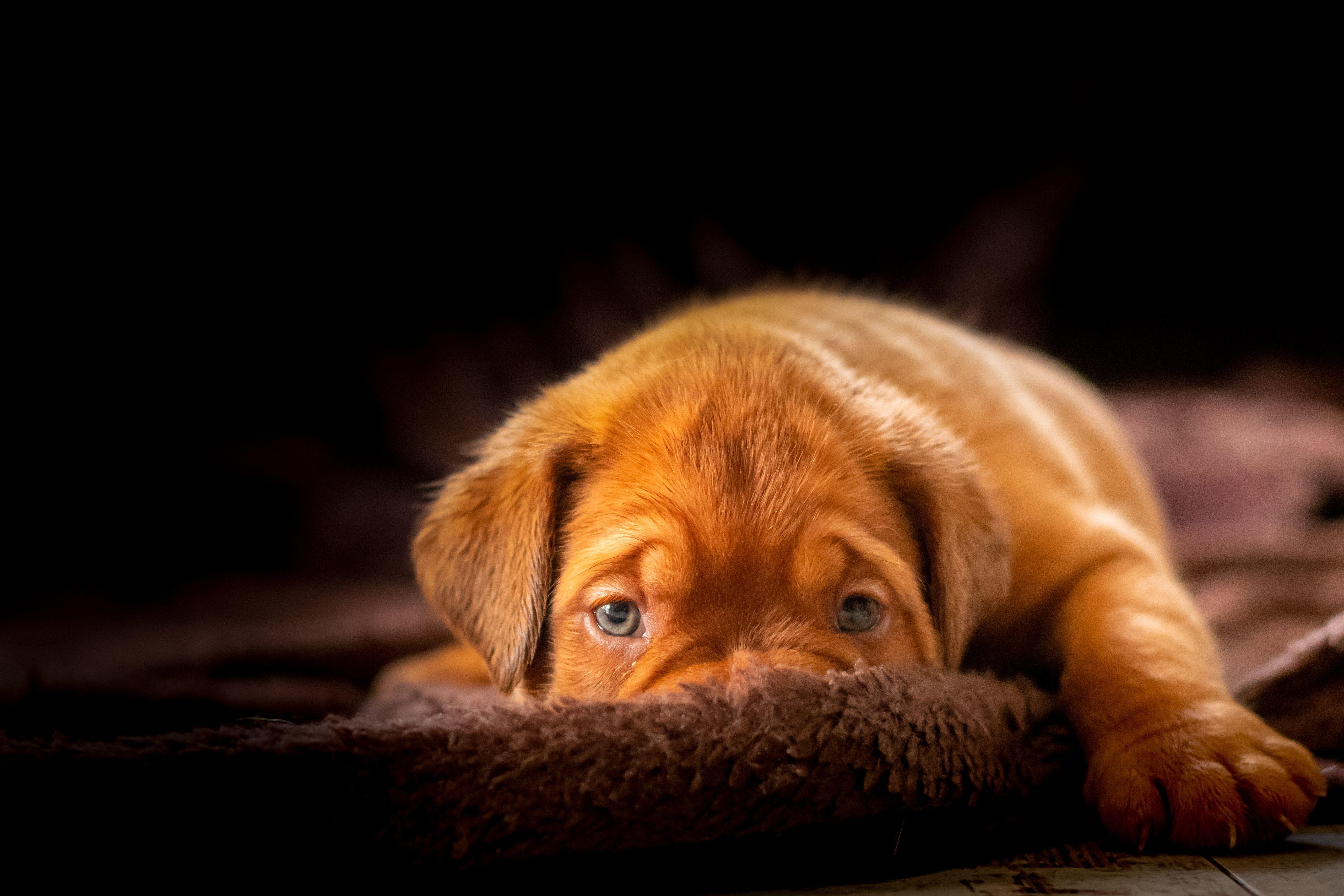 Dogs 1 Spoiledpets Petslife Pets Cats Petslover Petsarefamily Dog Whining Best Dog Training Dog Training