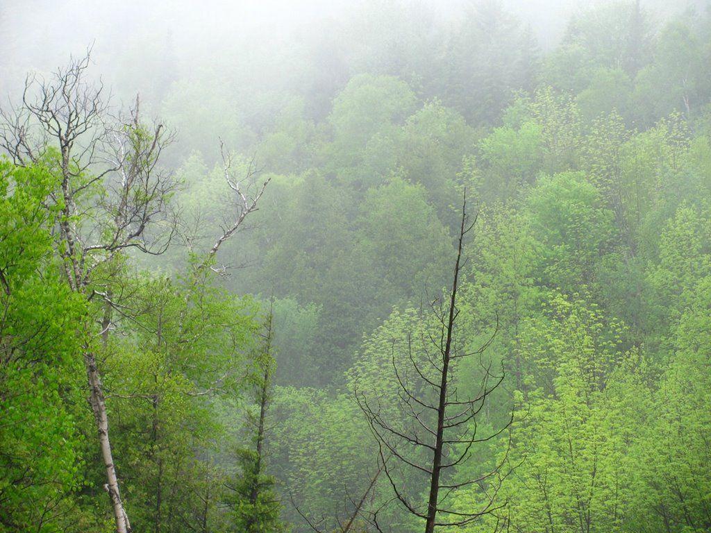 http://static.panoramio.com/photos/large/24298876.jpg