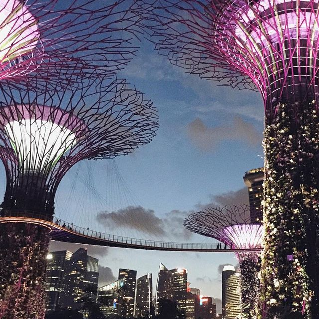 Welcome To Singaporeu0027s Awe Inspiring 101 Hectares Garden. Set In The Heart  Of The