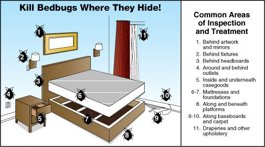 effective bed bug prevention in london | bugs | pinterest