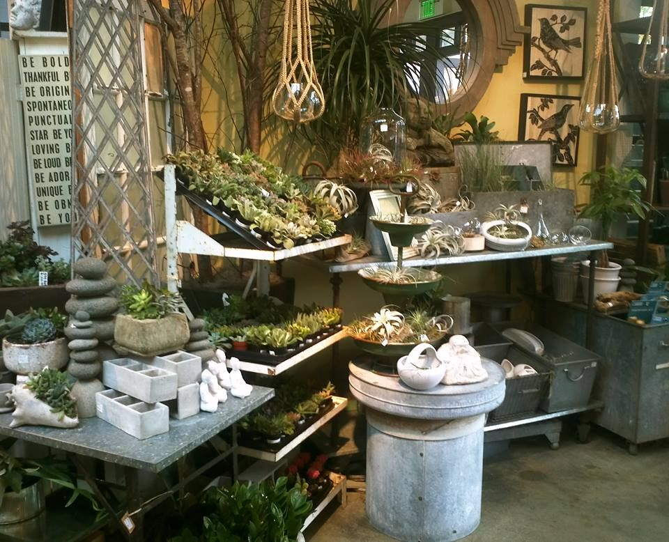 Succulents and air plants at Ravenna Gardens, Seattle (in