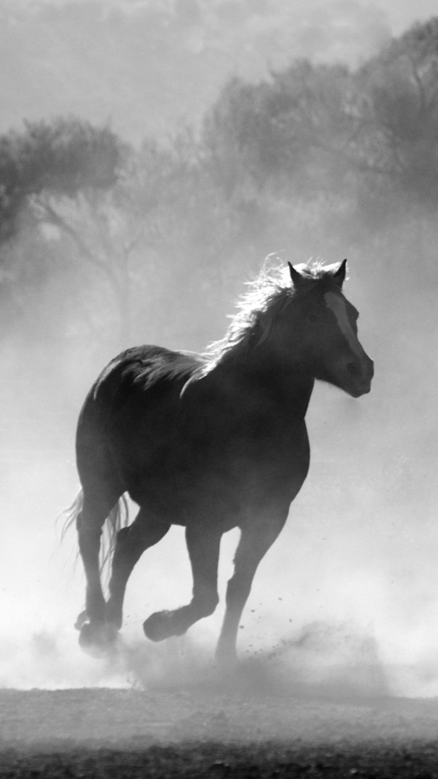 Horses In The Mist Wallpaper Iphone Android Desktop Backgrounds Horse Wallpaper Horses Animals