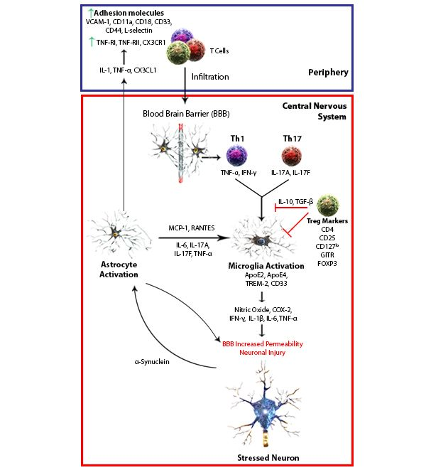 Neuroinflammation Antibodies For Ihc Infiltration Interesting Articles Molecules