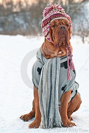Baby Its Cold Outside/so very cute, normally I don't like animals in clothes but this is adorable