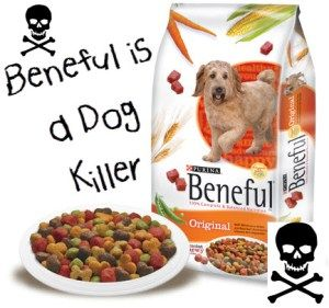 I Was Feeding My Dog Beneful And He Became Sick His Symptoms Were