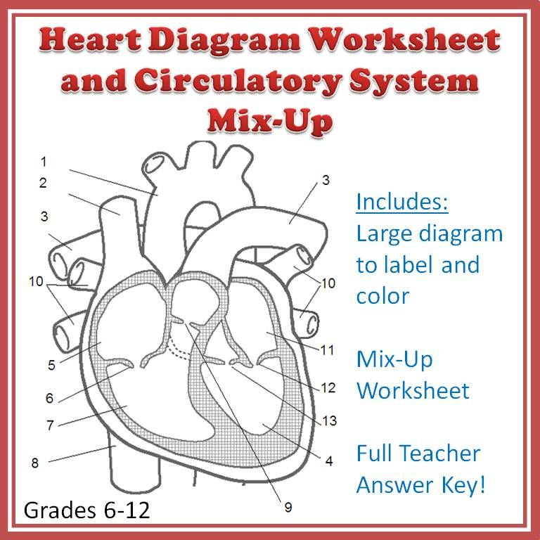A clear, ready-to-print heart diagram worksheet that includes the ...