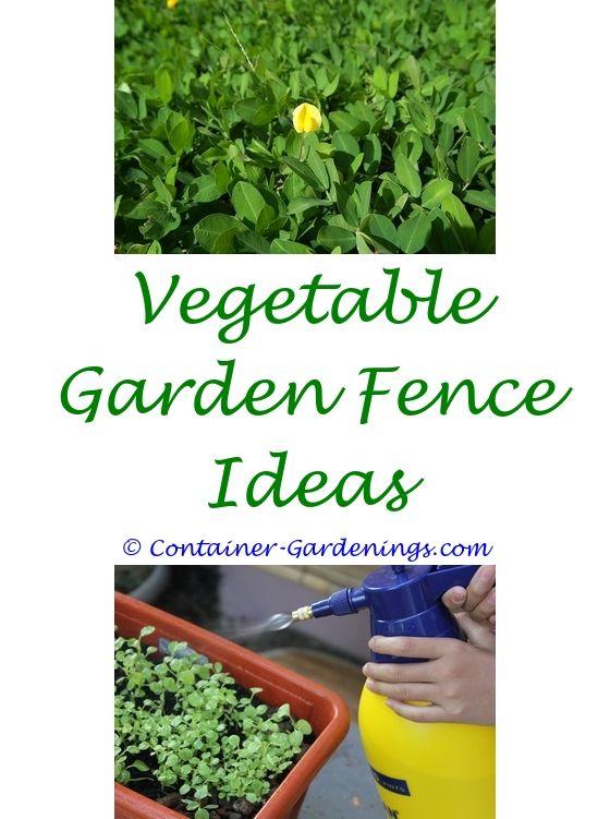 Where To Plant A Vegetable Garden | Garden ideas, Balcony gardening ...