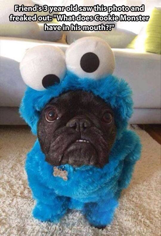 Black Pug Dog Wearing A Cookie Monster Costume Dogs Pugs