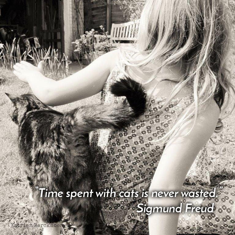 """""""Time spent with cats is never wasted."""" - Sigmund Freud  #cats #pets"""