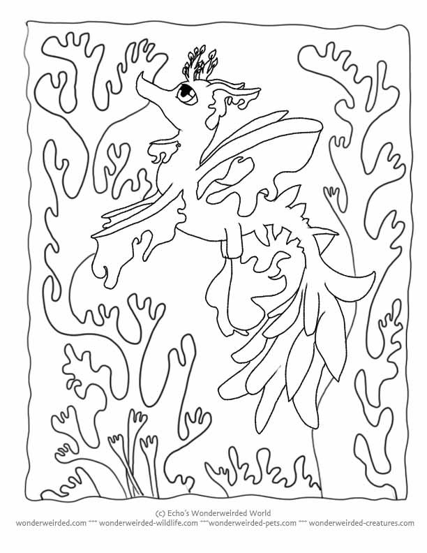 Cartoon Coloring Pictures Seadragon Echo S Seahorse Coloring