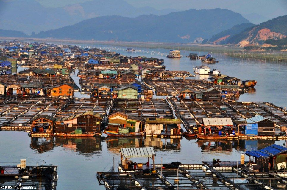China's floating fishing cities home to 7,000 'gypsies of the sea' |  Floating city, Floating boat, City