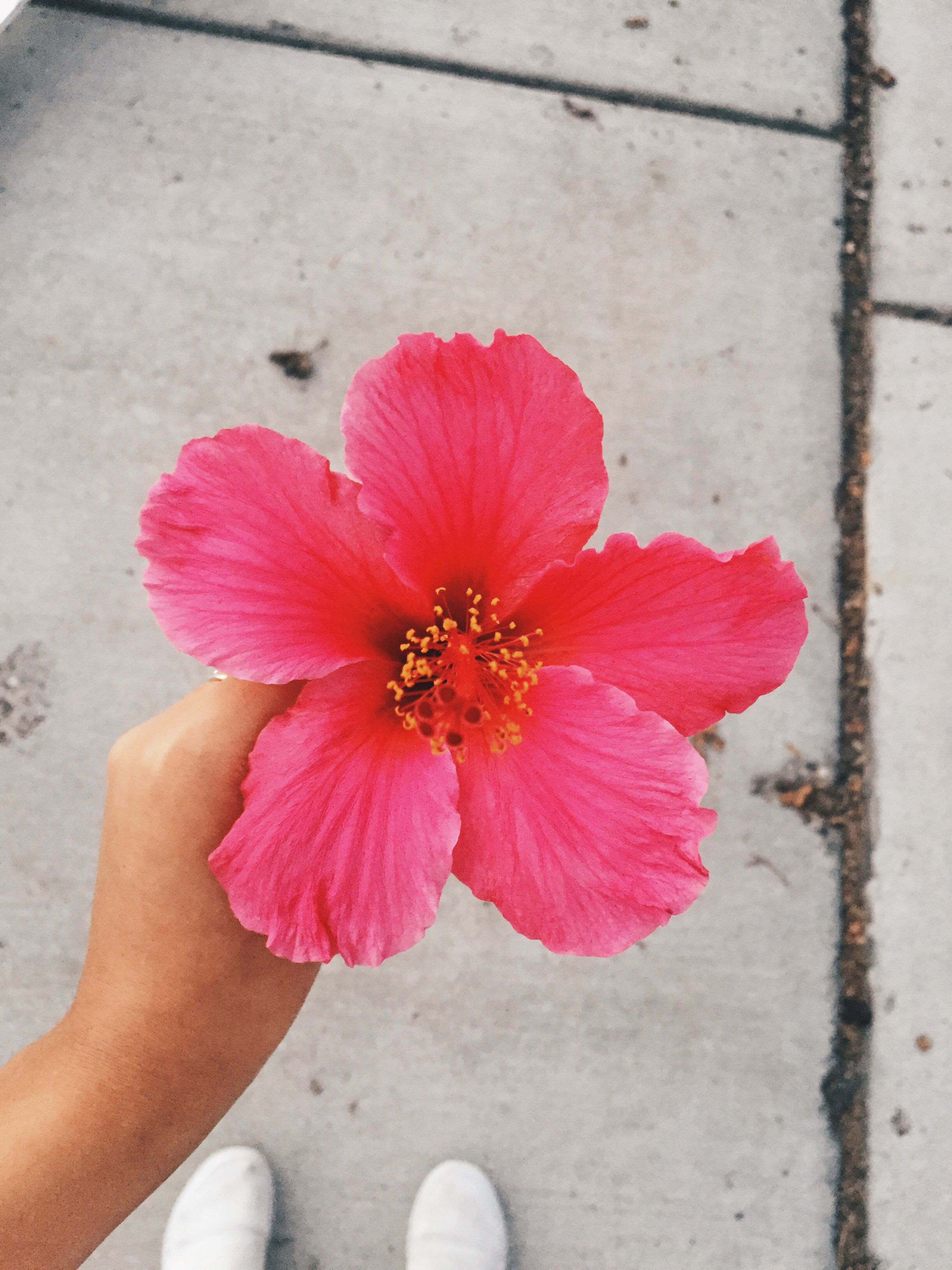 Island Aesthetic Tumblr Hawaii Flower Hibiscus Aesthetic