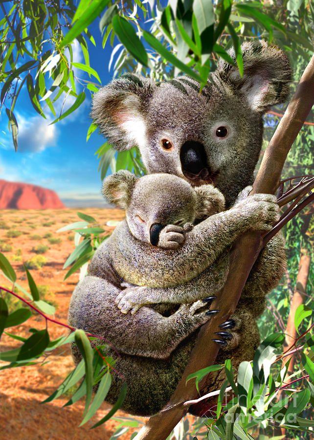 Koala And Cub by Adrian Chesterman
