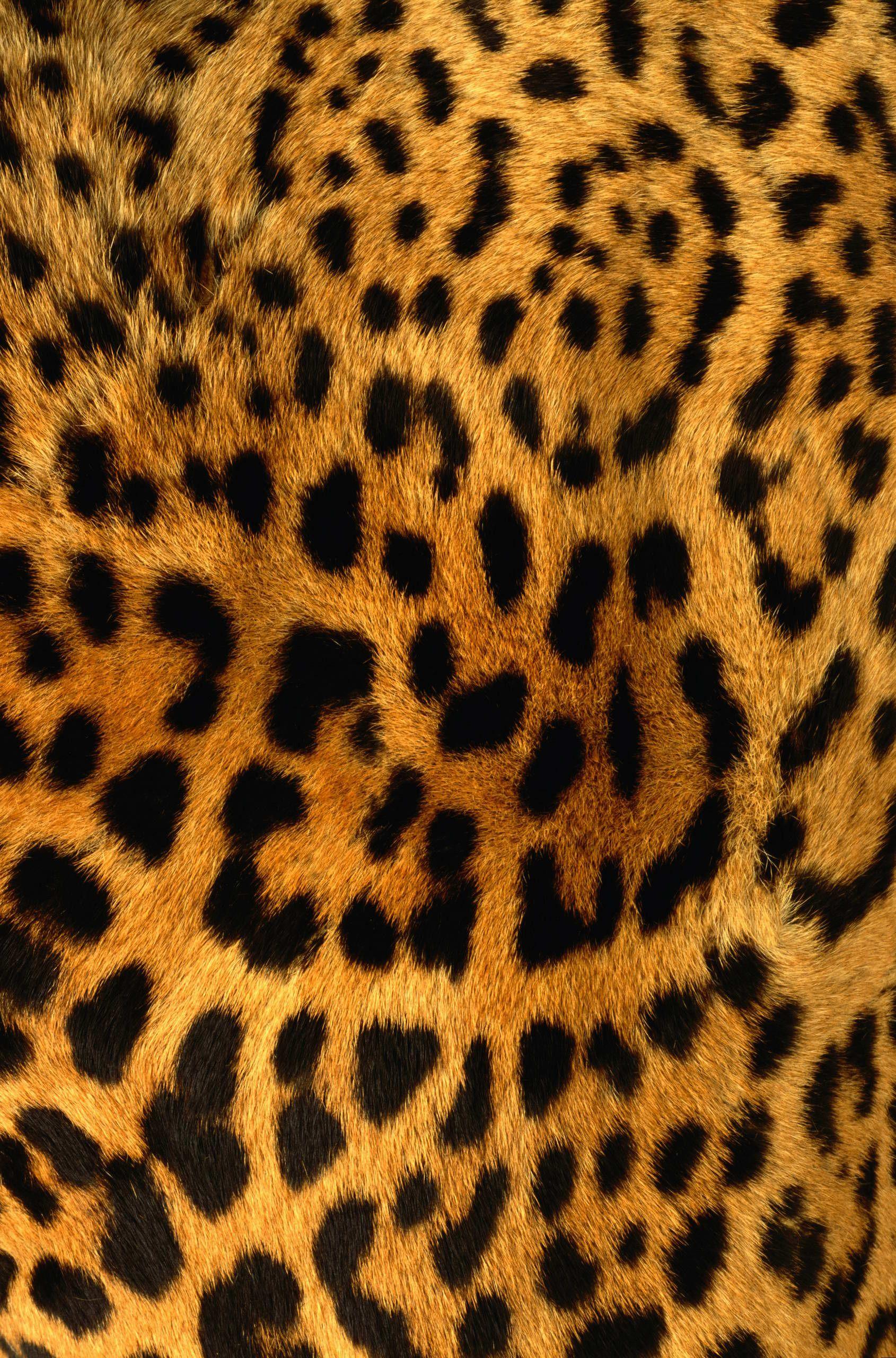 Animal Skin Chair Covers Wedding Newcastle Upon Tyne Leopard Texture Digital Fashion Illustration