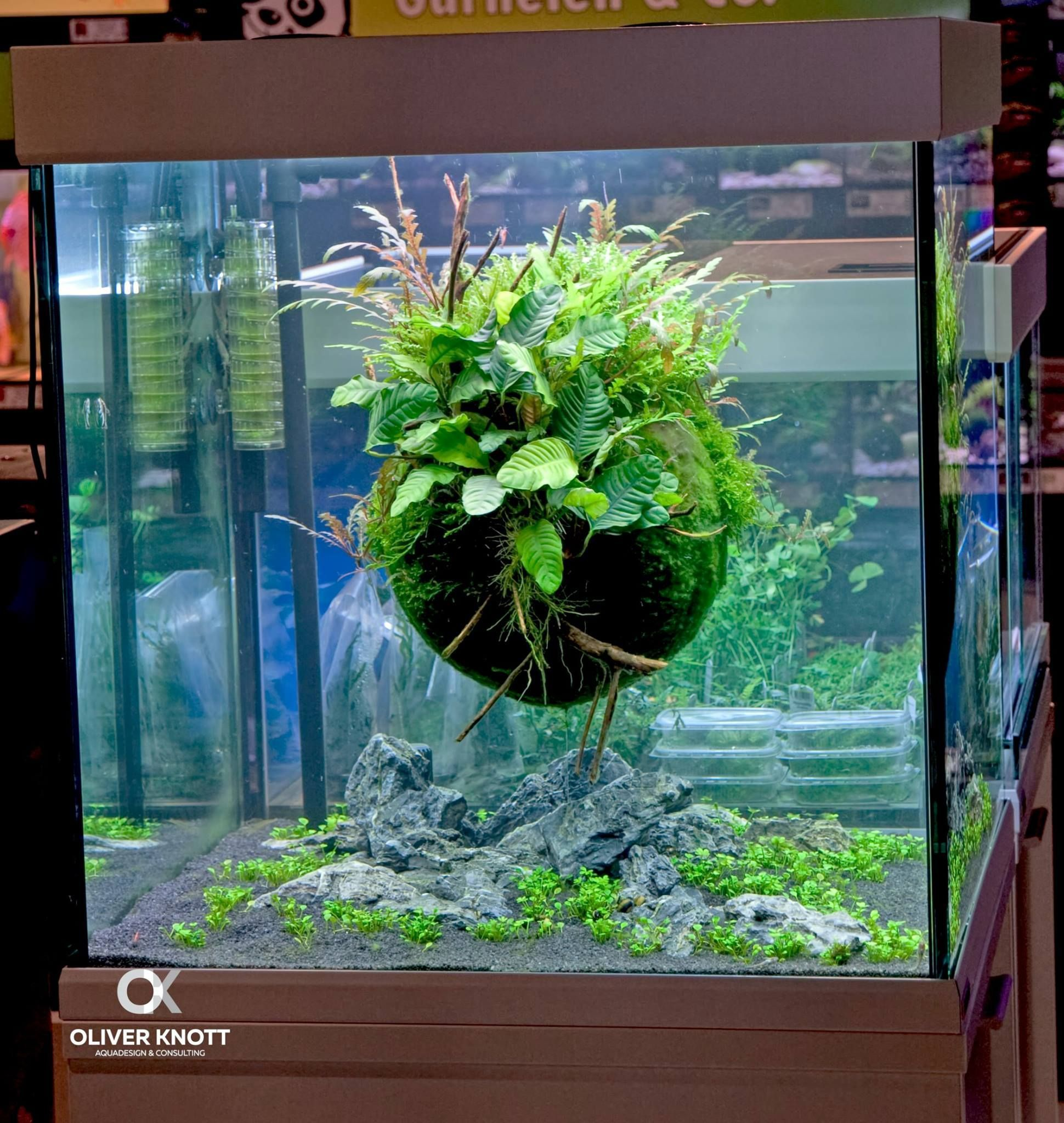 Pin by kim medenwaldt on terrarium fish tanks pinterest