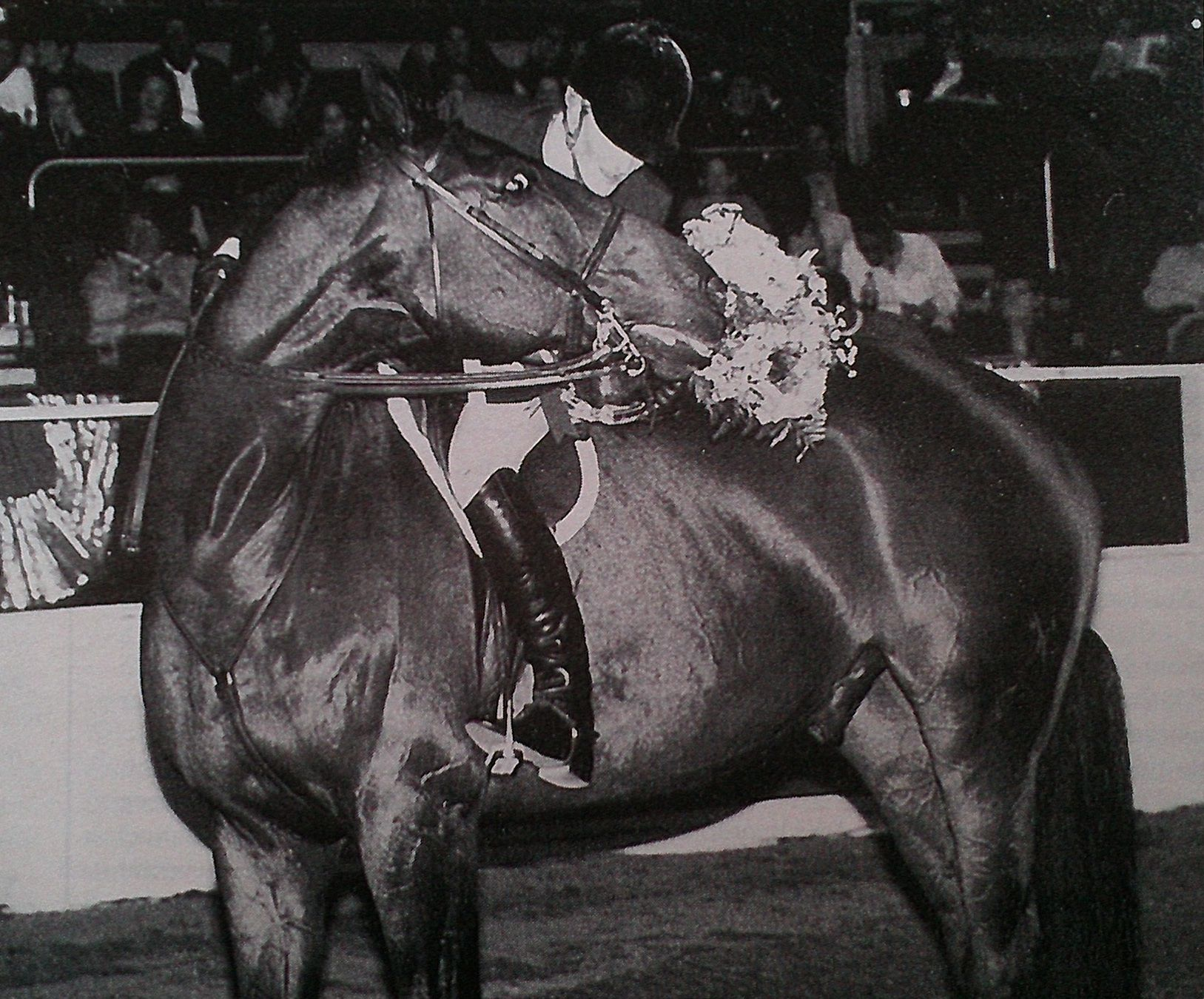 Avery Dimmig won the ASPCA Maclay Finals on Derrek in 2000. Photo by Ramsay.