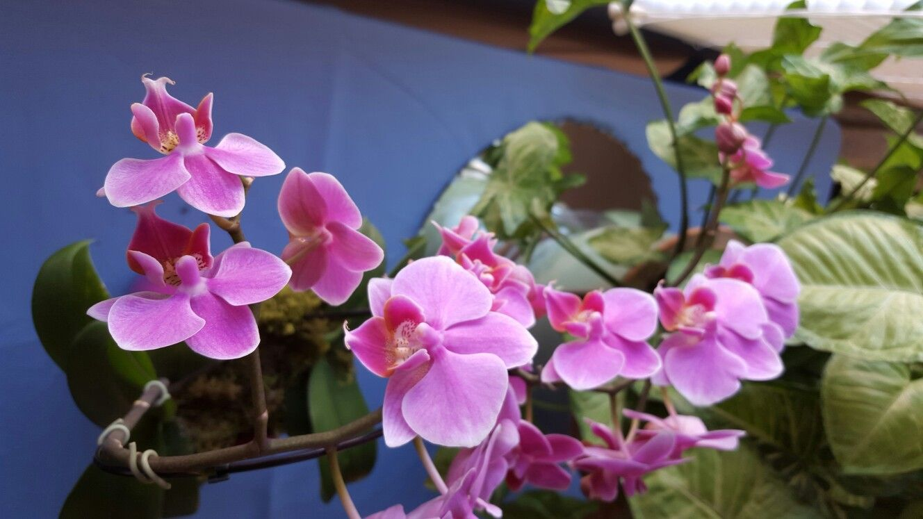 My Beautiful Orchids Flowers Pinterest Orchid And Flowers