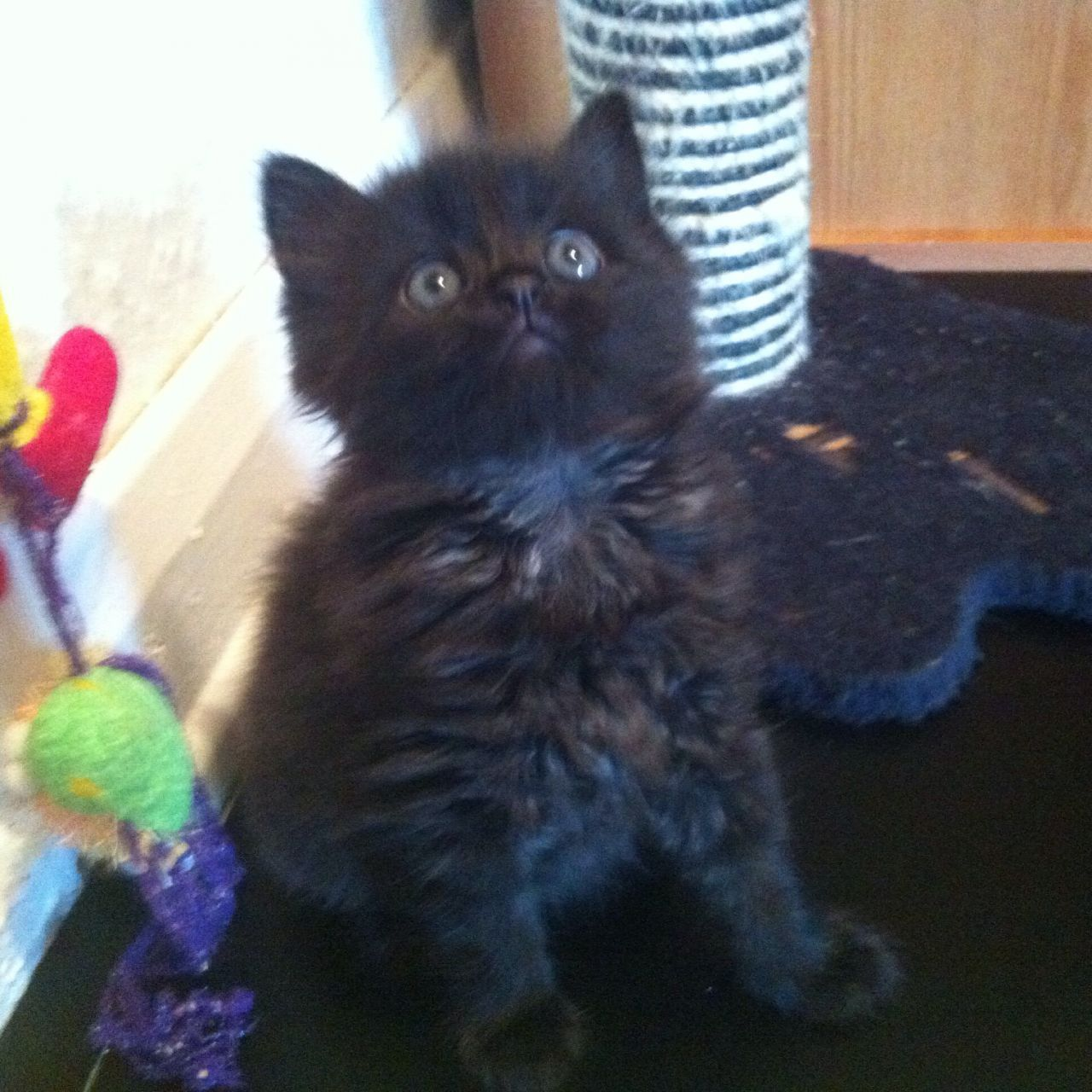 4 Beautiful Black Kittens Kittens Beautiful West London