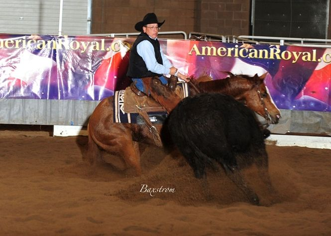 Cutting or Working Cow Horse