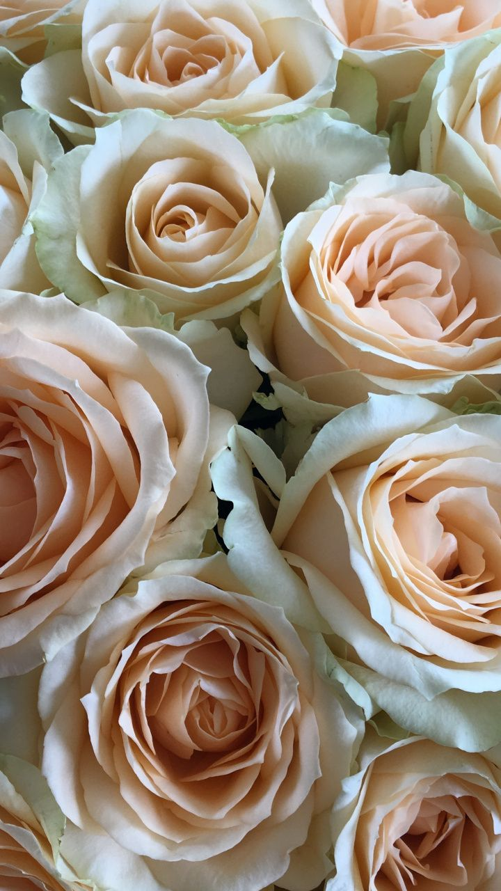Flowers roses white pink bouquet 720x1280 wallpaper flowers flowers roses white pink bouquet 720x1280 wallpaper flowers wallpapers pinterest pink bouquet flowers and flowers garden mightylinksfo