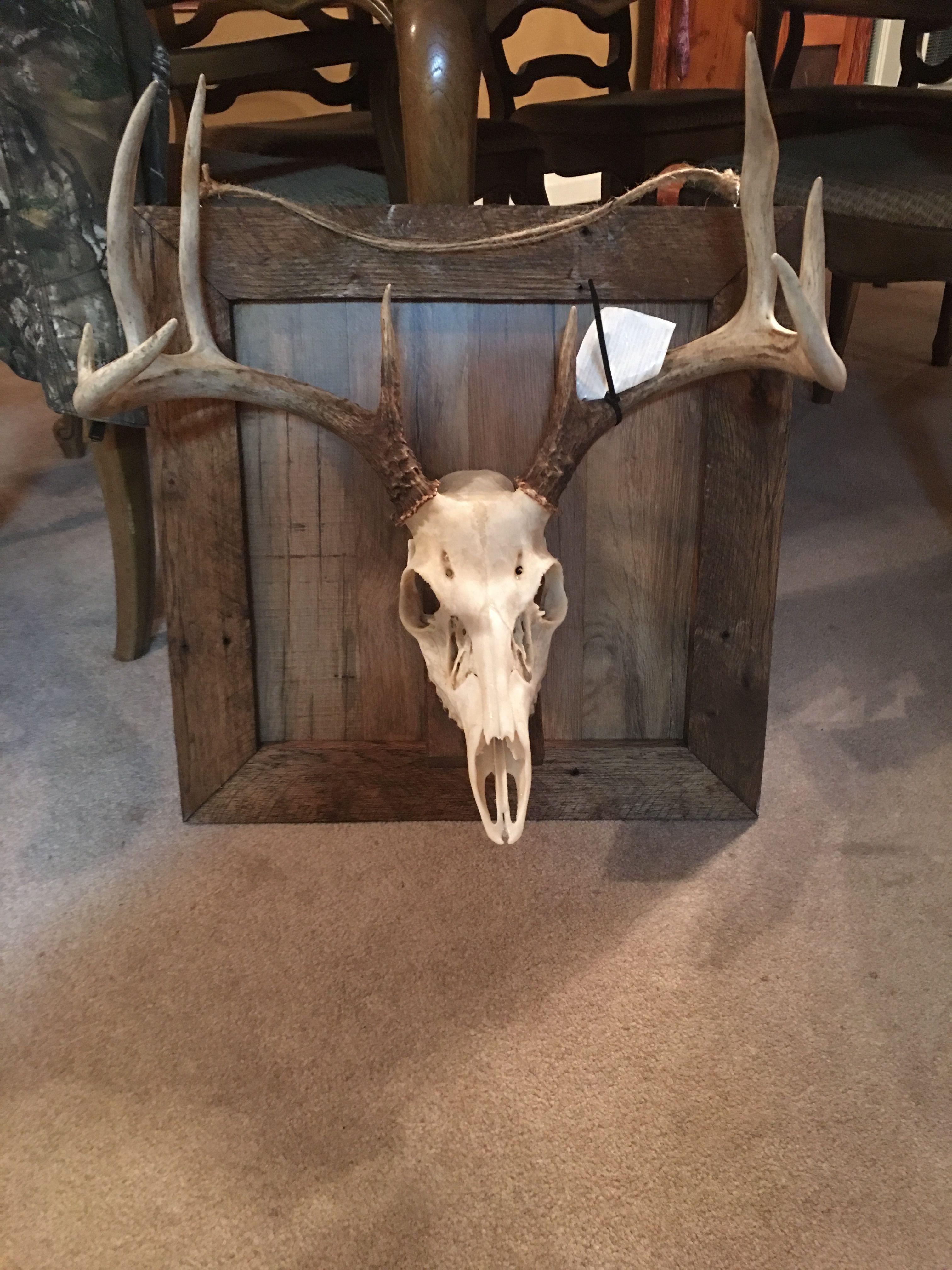 Custom Handmade European Mount Deer Hunting Decor Deer Antler Decor Deer Mount Decor