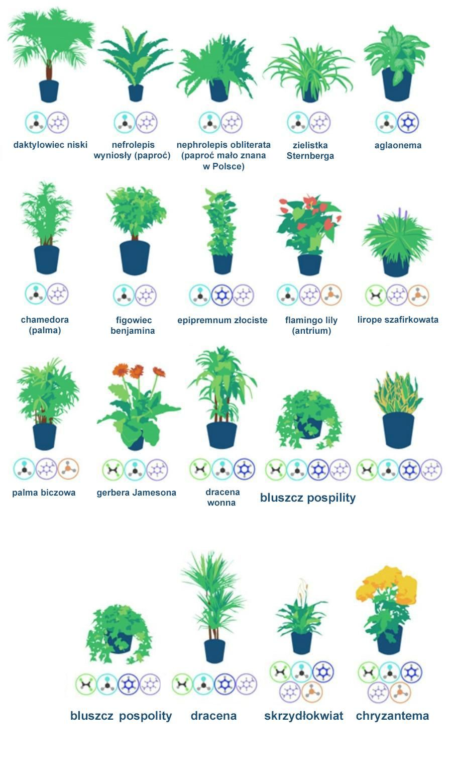 18 Roslin Ktore Oczyszcza Powietrze W Twoim Mieszkaniu Air Cleaning Plants Air Filtering Plants Plants