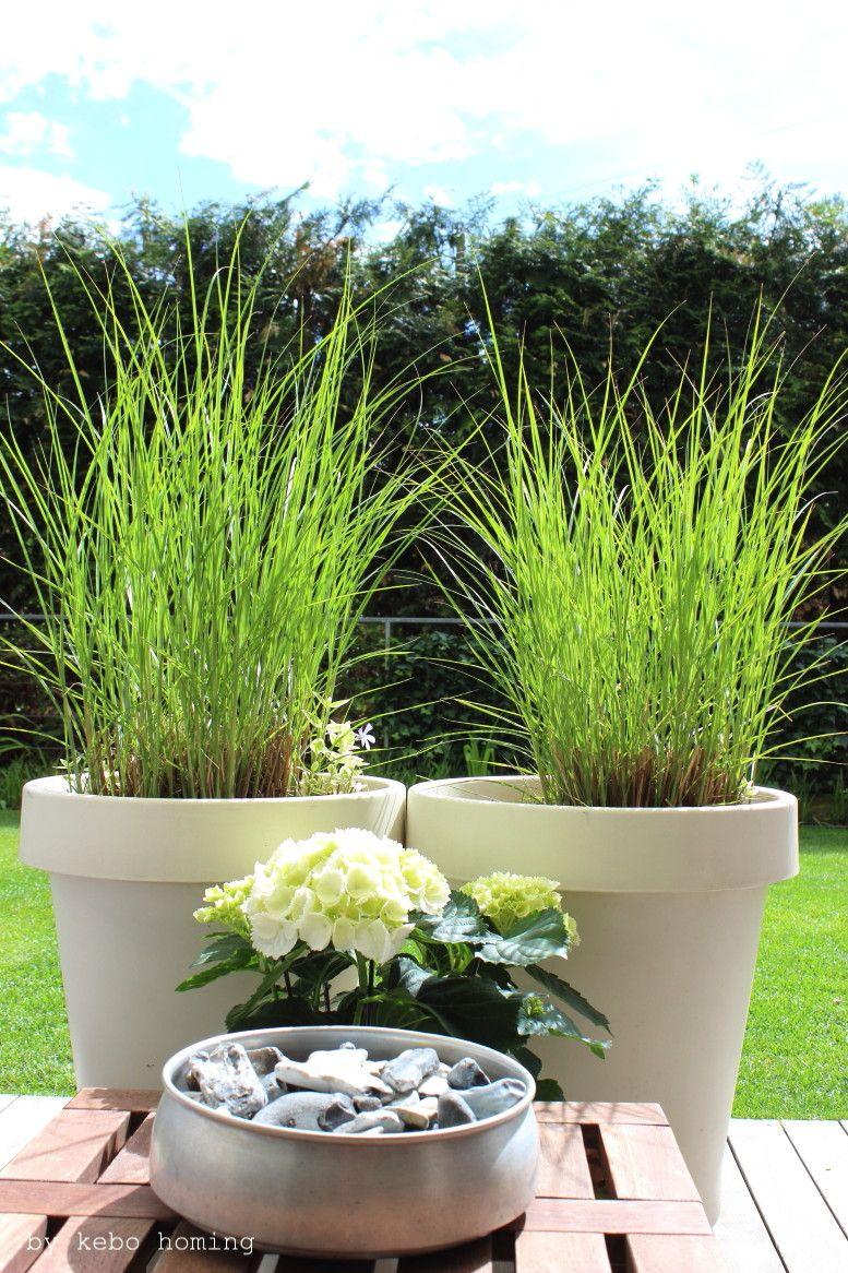 Ein klar strukturierter minimalistischer Garten, verschiedene Gräser ...