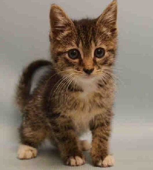 Adopt Joe And Trevor On Petfinder Pet Search Cat Adoption Pets