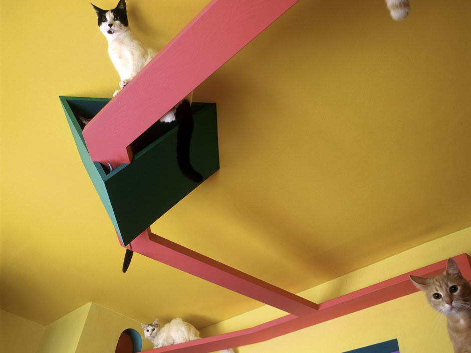 Photos The Cats House A Human Sized Cat Condo With Floor To Ceiling Scratching Post Has Closed Cat Condo Diy Cat Condo Cat Diy