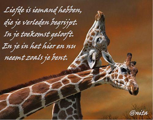 hyves spreuken SPREUKEN EN WIJZE GEZEGDEN. Hyve   hyves.nl | Spreuken | Pinterest  hyves spreuken