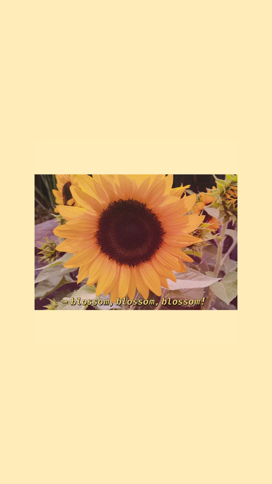Iphone Aesthetic Pastel Iphone Aesthetic Yellow Wallpaper Hd Novocom Top