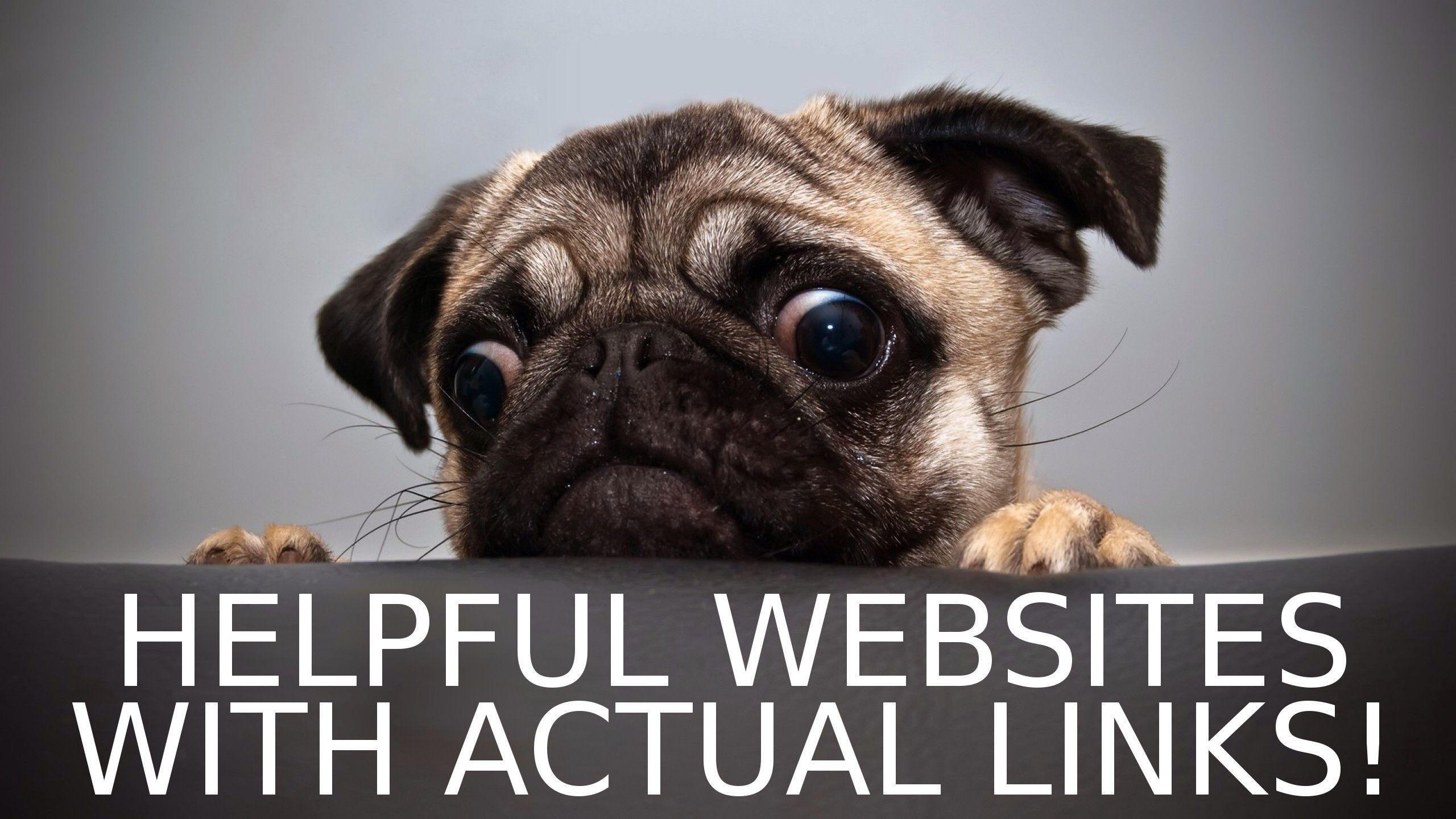 Helpful Websites Funny Animal Photos Cute Pugs Pugs