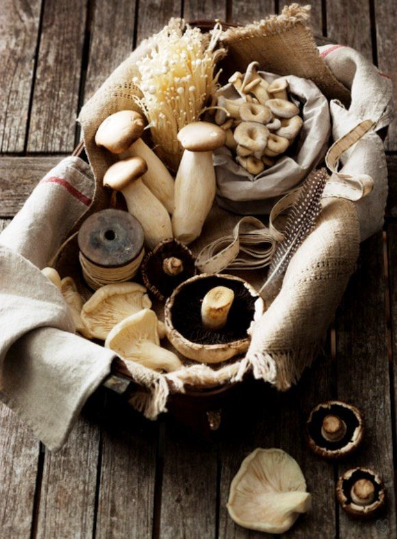 http://gobtube.com mushrooms