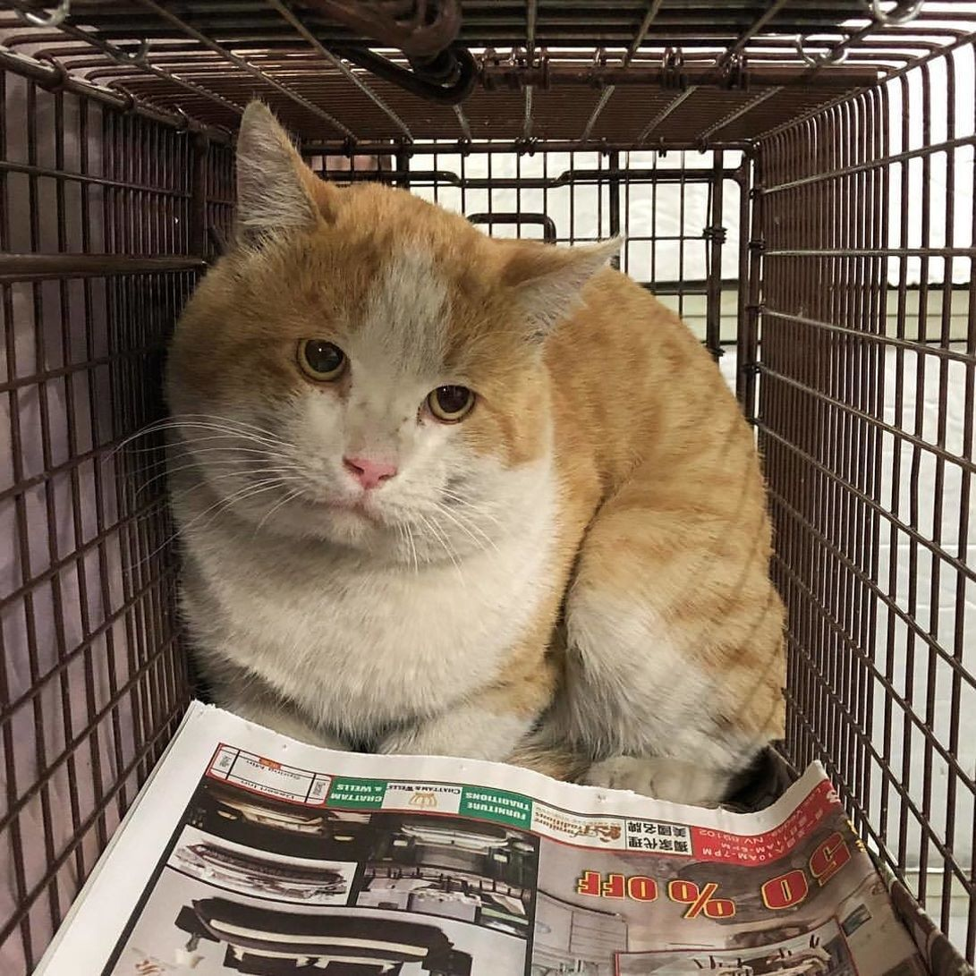 JANUARY/FEBRUARY TNR EFFORTS Why is trapping this time