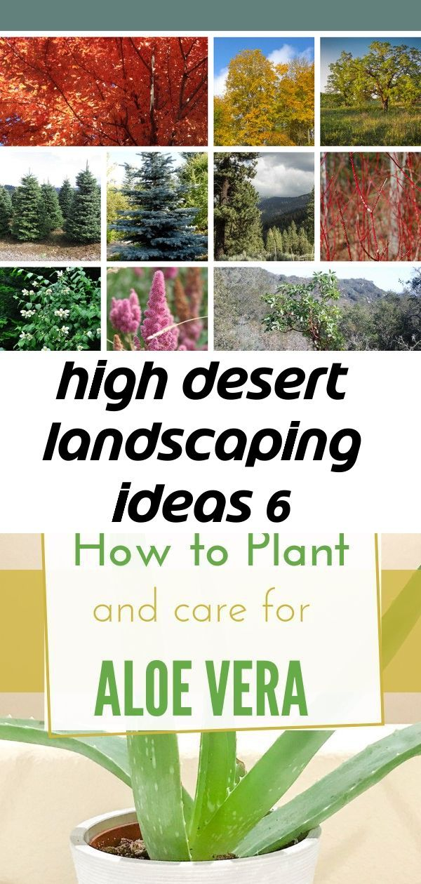 High desert landscaping ideas 6 Living in a high desert climateCheck out this plants that are native to high desert area and see these high desert landscaping ideas you w...