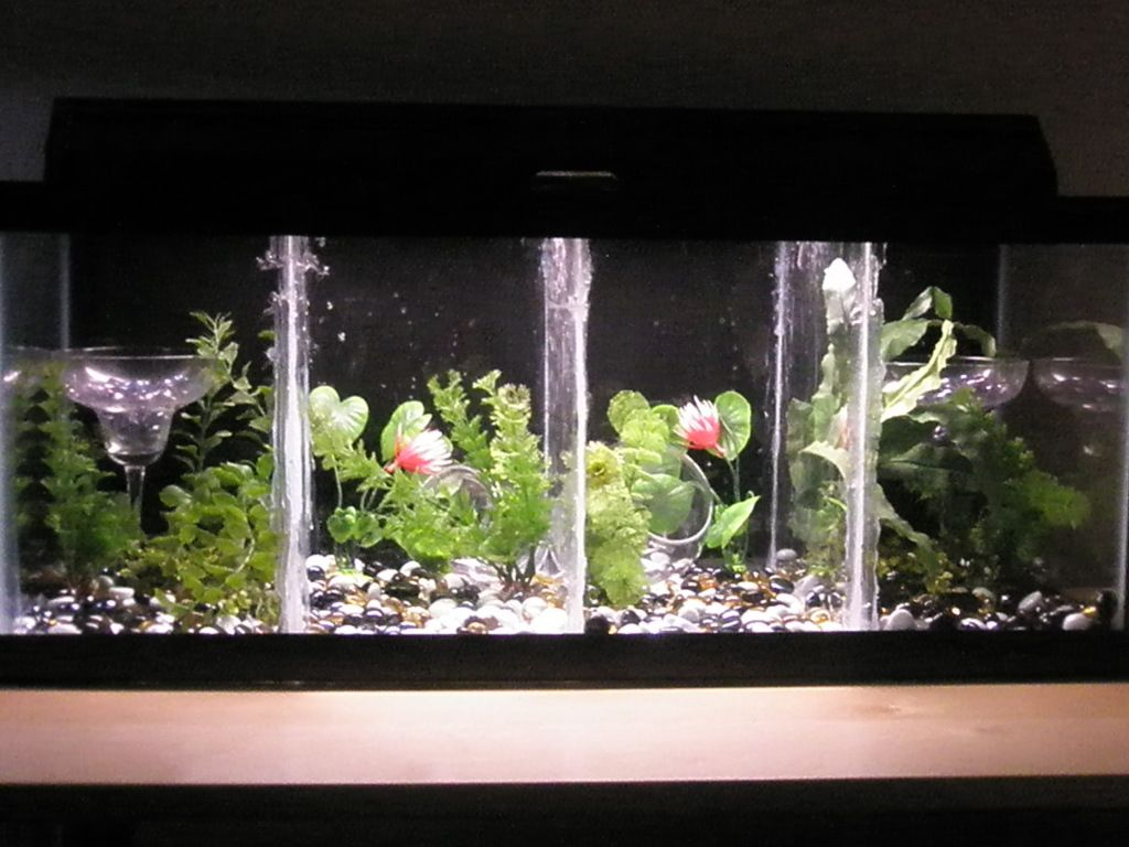 Image result for 20 gallon long betta tank aquariums for Betta fish tanks for sale