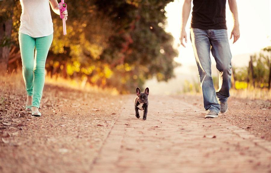 The Daily Frenchie Dog Photoshoot Girl And Dog French Bulldog