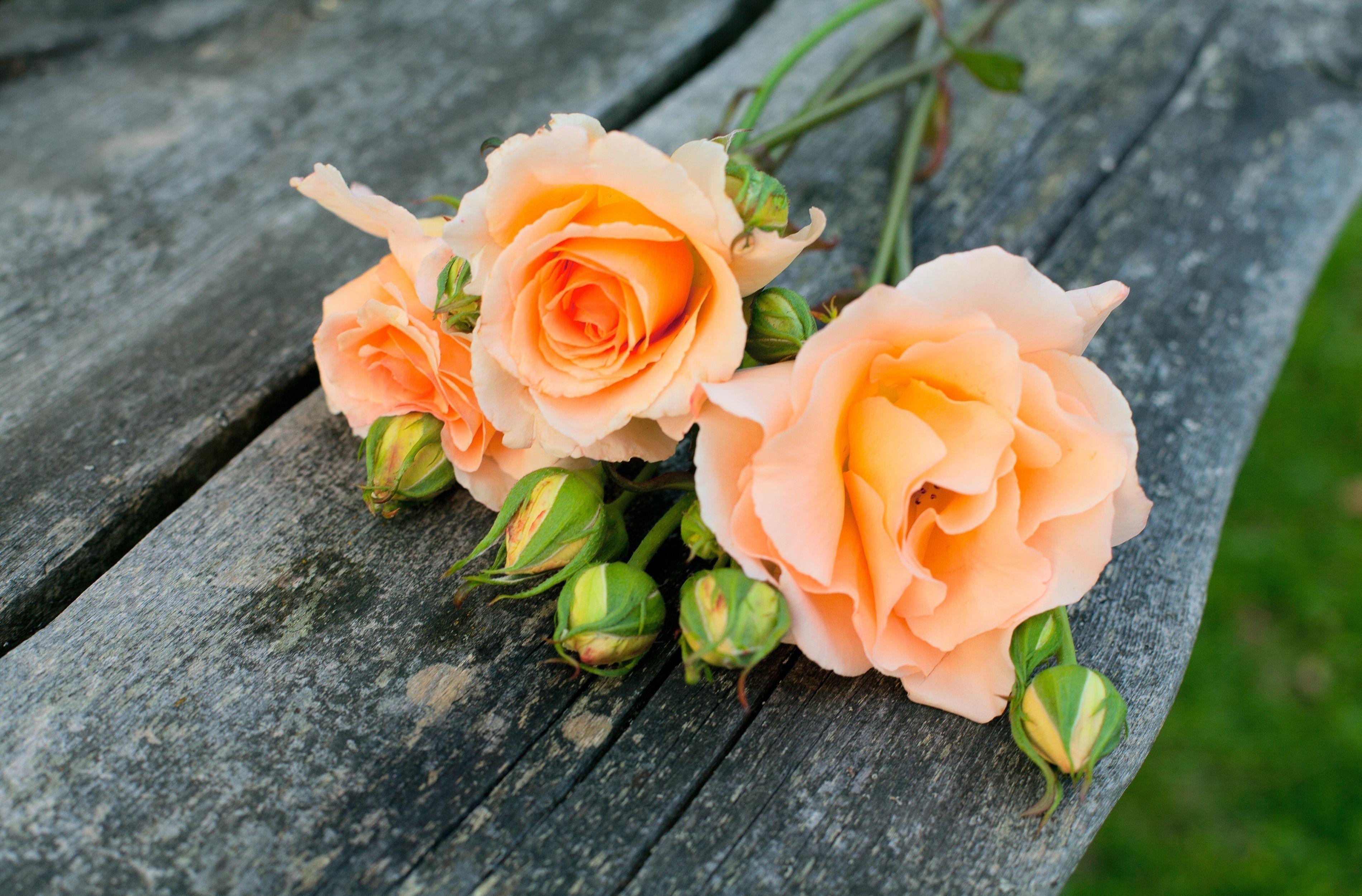 Baixar Wallpaper Natureza Flores Flor Rosas Papis De Parede