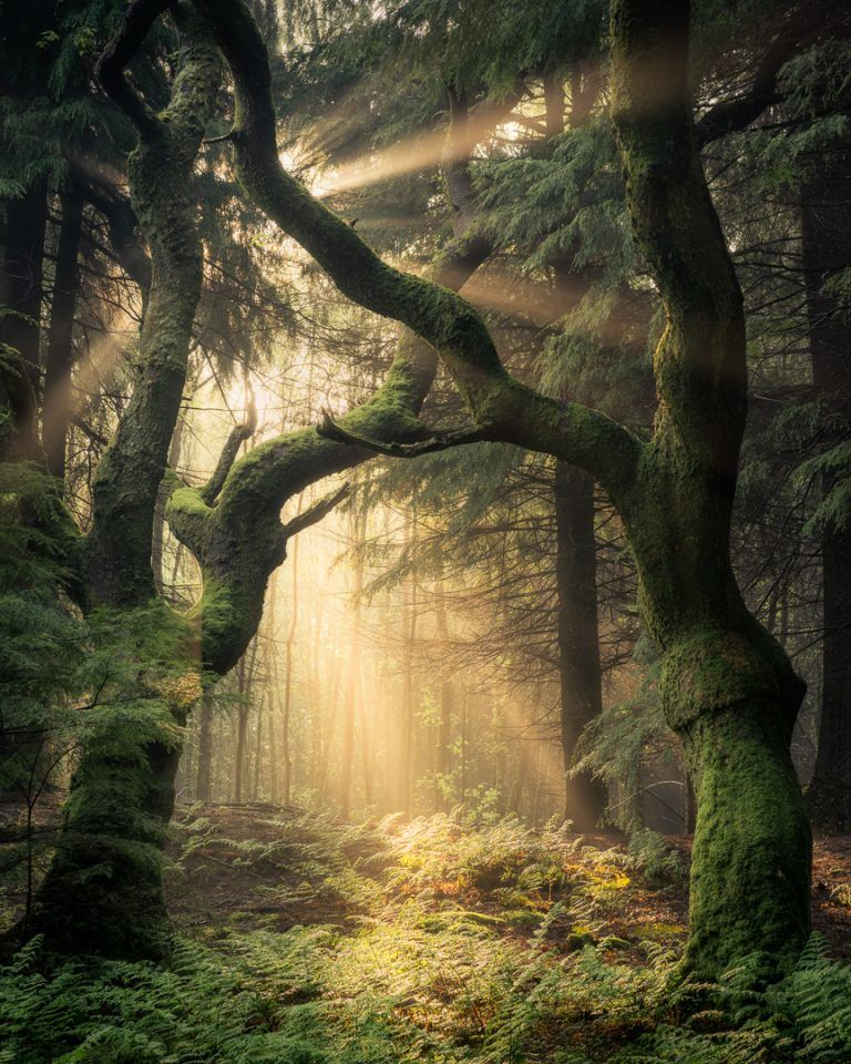 Guardians of the Forest - Simon Baxter Photography
