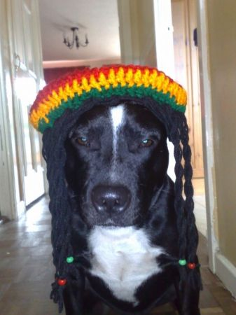 Ted the dog as Bob Marley
