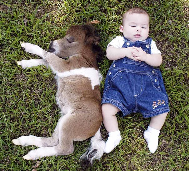 39 Mini Horses You Don T Want Your Kids To See Baby Horses Baby Animals Tiny Horses