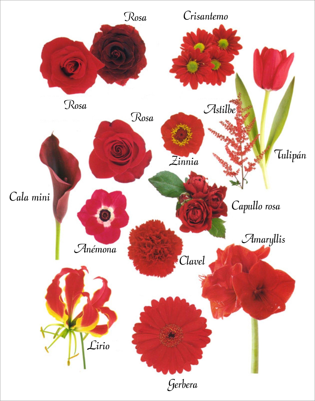 Las flores rojas otorgan al ramo un aire majestuoso junto - Clases de flores y sus nombres ...