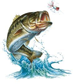 image result for bass jumping out of water cakes pinterest bass water and fish. Black Bedroom Furniture Sets. Home Design Ideas