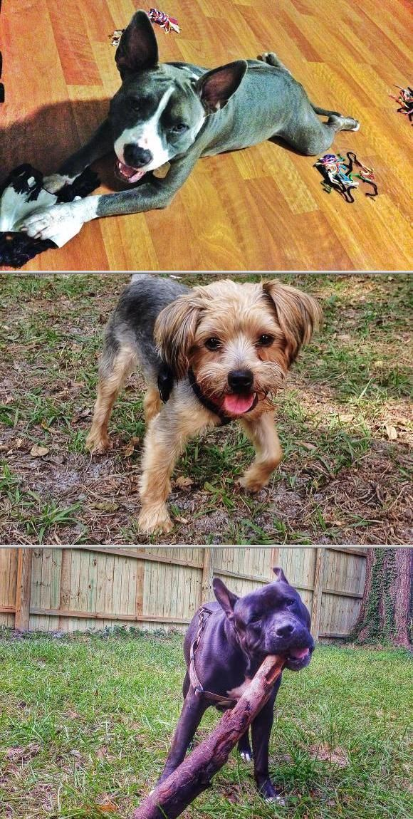 Tripp S Dog Training St Petersburg Offers Puppy Training Basic